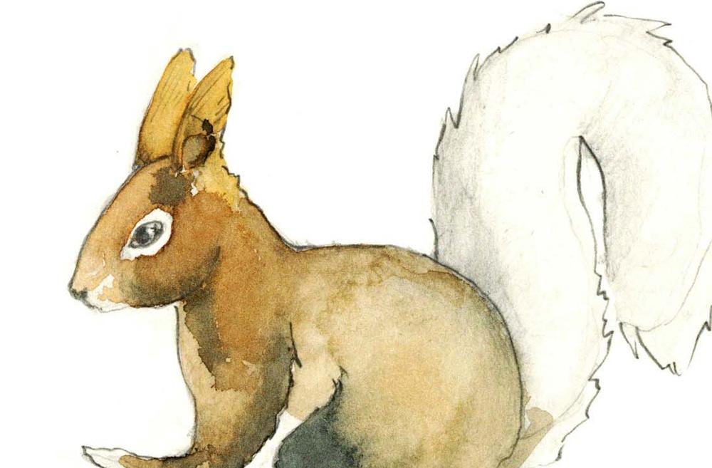 Zeichenkurs Zeichnen Dienstagabend in Bremgarten Ag Zeichnen für Anfänger